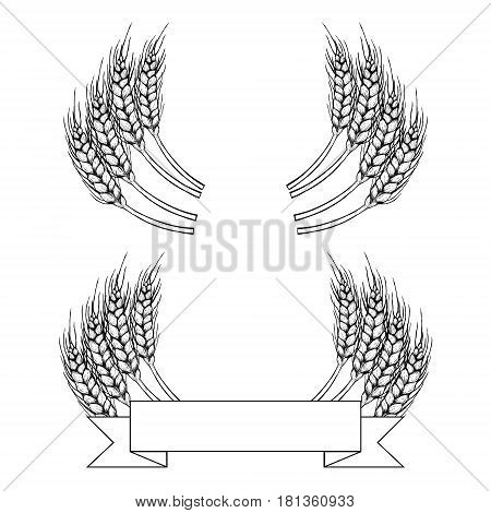 Hand drawn set of rye. Drawing spikelets located in a semi-circle. Sketches isolated. Black and white graphic design. Vector illustration.