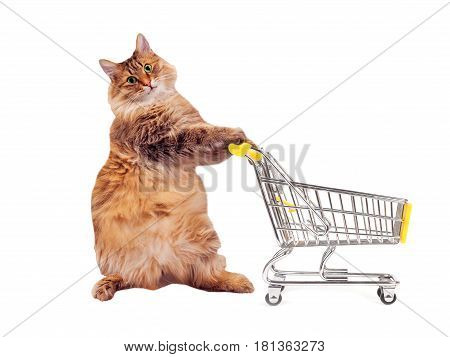 The Big Shaggy Cat With Shopping Cart Isolated On White..number 9