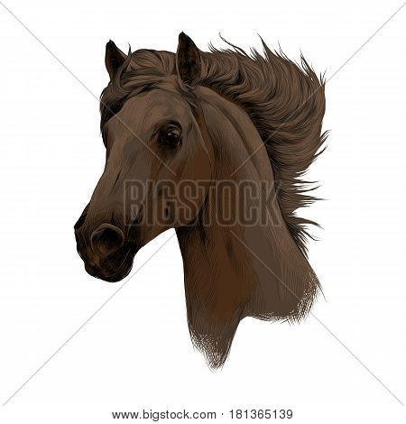 head brown horse profile sketch vector chart color picture