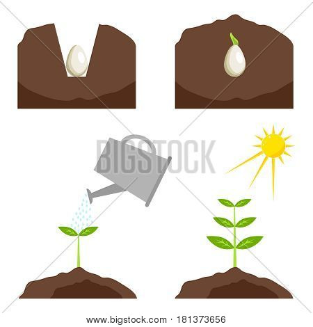 Phases of plant growth. Flat design vector illustration vector.