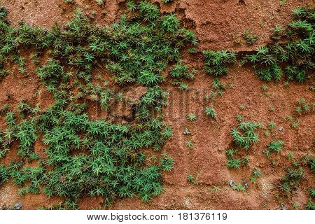 Small plants growing on sandstone wall background