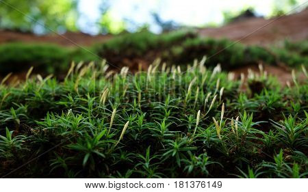 Miniature moss and plants growing on sandstone