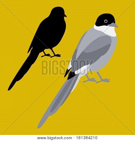 magpie vector illustration style Flat  set black silhouette