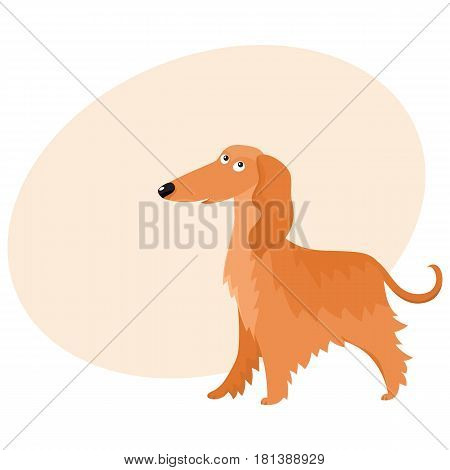 Cute long haired Afghan hound dog character, cartoon vector illustration with space for text. Nice and friendly dog character, Afghan hound breed, colorful cartoon illustration