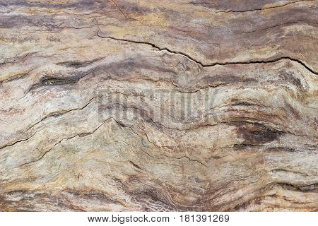 Background of the old trunk of the withered fruit tree without bark covered by cracks