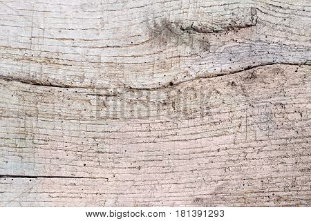 Background of surface of the old dilapidated wooden plank made of deciduous tree covered by cracks and darkened with time