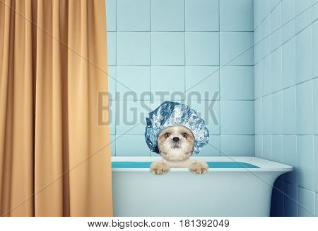 cute wet shitzu dog cat in the bath