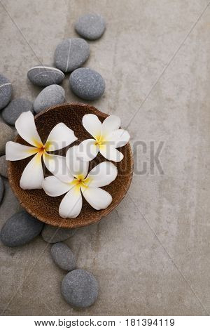 frangipani  in bowl with spa stones on grey background.