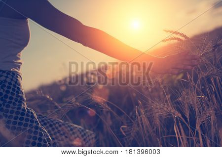 Blurred Hand Touching Wheat Spikes With Her Hand At Sunset (intentional Sun Glare And Lens Flares, L