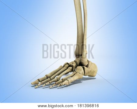 Medical Accurate Illustration Of The Foot Ligaments 3D Render On Blue