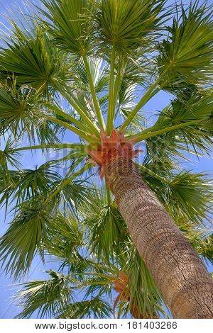 seen from below a palm tree and blue sky