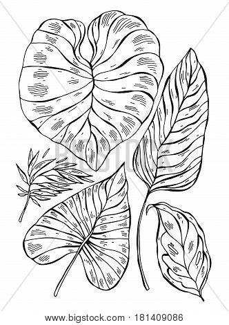 Tropical jungle exotic palm leafs lined illustrations set on white background.Hand draw tropic vector illustration.Hand drawn sketch graphic tropical plants set.Travel design element