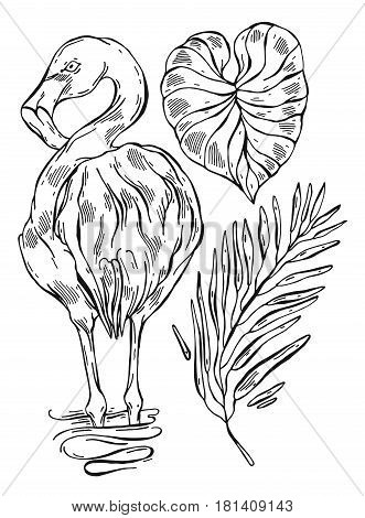 Tropical jungle exotic palm leafs and exotic bird flamingo lined illustrations set on white background.Hand draw isolated tropic vector illustration.Hand drawn sketch graphic tropical plants set.