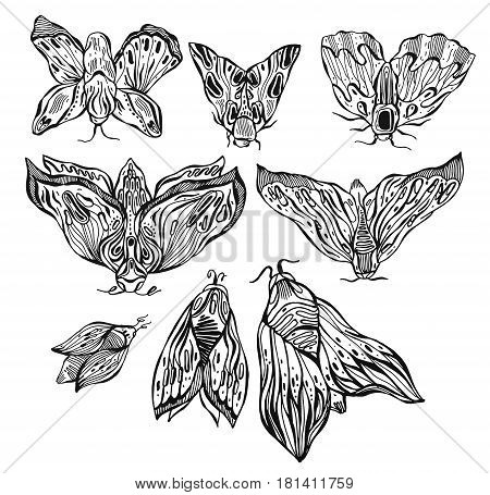 Hand drawn moth set with ornament lines. Design tattoo art. Isolated vector illustration. Trendy Vintage element. Dark romance philosophy spirituality occultism alchemy death magic.