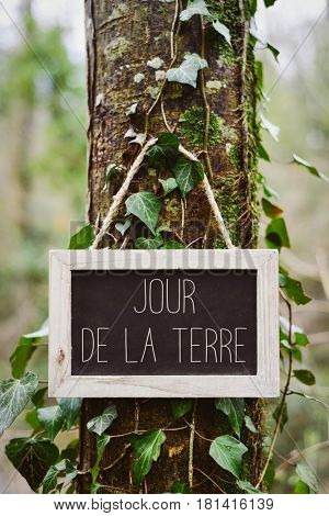 closeup of a wooden-framed chalkboard with the text jour de la terre, earth day in french, in the trunk of a tree