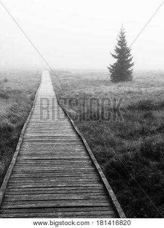 Wooden path in peat bog in black and white, Bozi Dar, Czech Republic, Europe. Bleak autumn landscape scene.