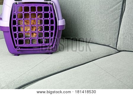 Foxy cat inside plastic carrier box on sofa