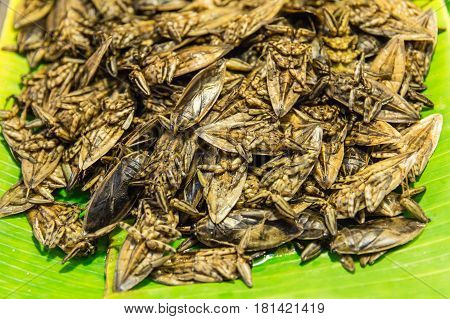 edible food insects and bugs fried for sale in Thailand Lethocerus indicus cooked.
