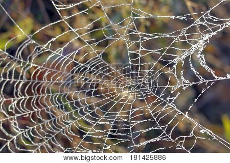 Spider Web Covered With Frost