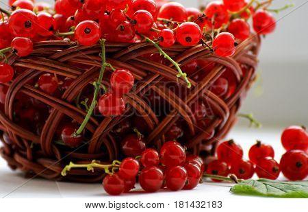 Berry background.Berries ripe red currant stacked in a small wicker basket. A few currants scattered on the table.