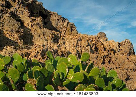 Cacti and rock formation landscape with blue sky in Port de la Selva Costa Brava Catalonia Spain