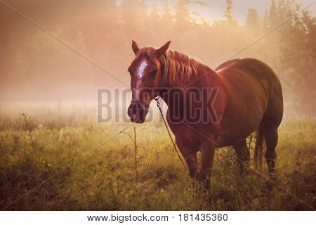 Horse Pasture Morning Fog Dew