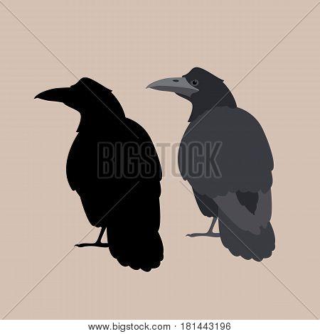 Raven vector illustration style Flat set silhouette