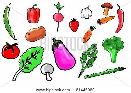 Some hand drawn vegetables against a white background.