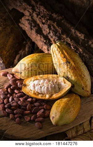 Cacao fruit raw cacao beans Cocoa pod on wooden background.