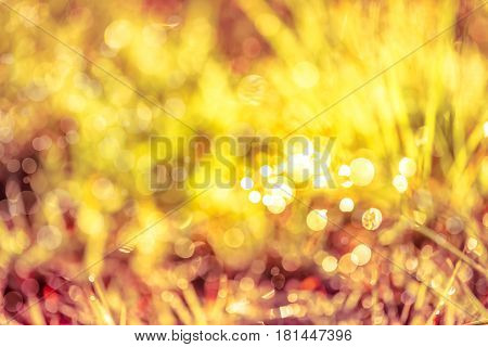 Abstract natural background. Fresh spring grass with dewdrops on grass defocused light blurred background with bright sunlight outdoor at the daytime. Sepia tone.