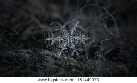 Macro photo of real snowflake: large snow crystal of stellar dendrite type with thin, long and ornate arms with side branches, and small central hexagon. Snowflake glowing on dark gray woolen fabric in diffused light of cloudy sky. Widescreen version.