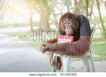 chimpanzee monkey sit on chair with donation boxes help animal concept