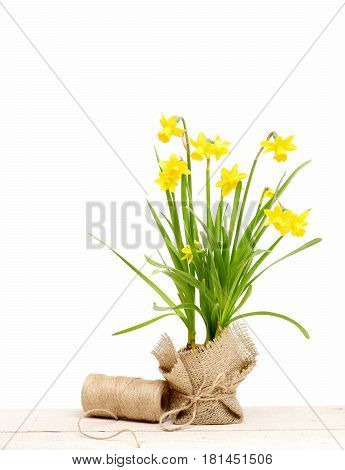 Spring Yellow Narcissus And Thread Or Rope Isolated On White