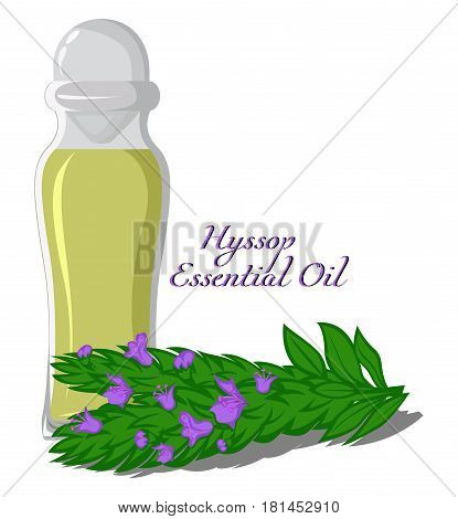 Bottle with essential oil of Hyssop with a twig on the background