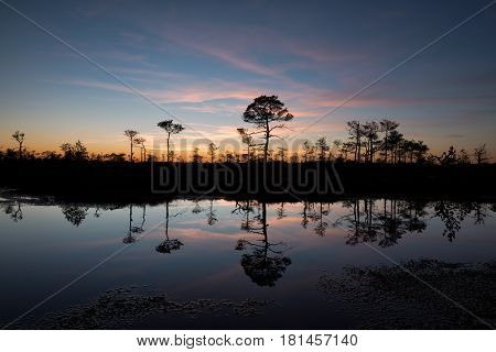Twilight reflecting from a bog pond in Estonia
