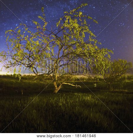 Beautiful night starry landscape. Astrophotography. Clear starry sky. Slow shutter speed. The spectacular sky. Scenic view. Morning fog. Photo on fisheye