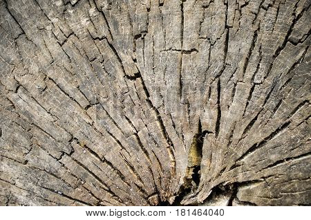 Background Of A Tree Bark. Texture