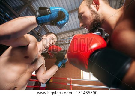 Boxer sents his opponent to the knockout.