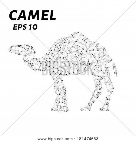Camel Consists Of Points, Lines And Triangles. The Polygon Shape In The Form Of A Silhouette Of A Ca