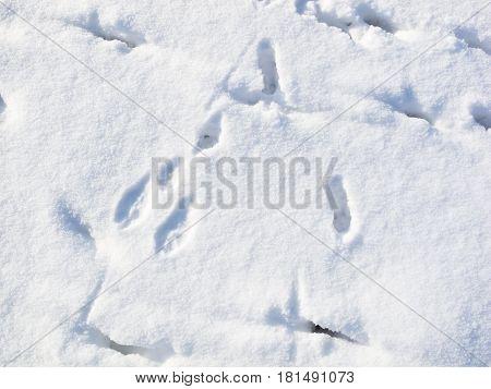 Rabbit Tracks