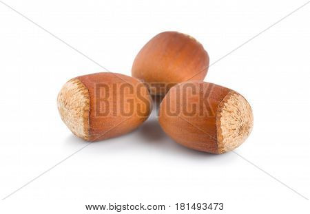 Three hazelnuts isolated on a white background