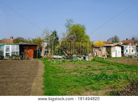 Allotment plots in Spring with fallen tree and working chaos.