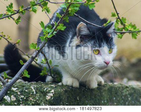 The cautious cat sits on the stone behind branches