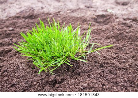 Bush of green grass against the background of plowed land