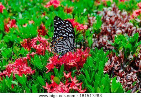 Butterfly in tropical garden. Butterfly in nature.