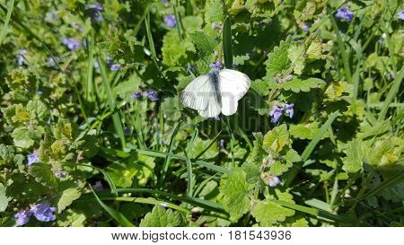 Black and white butterfly sitting on a flower
