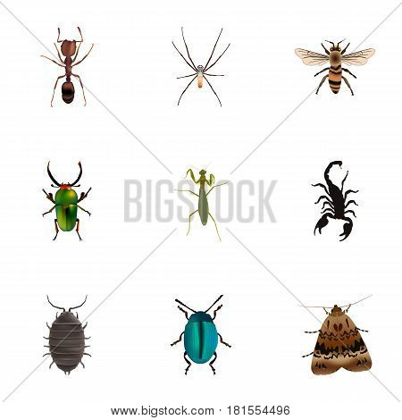 Realistic Wisp, Poisonous, Insect And Other Vector Elements. Set Of Animal Realistic Symbols Also Includes Poisonous, Beetle, Pismire Objects.