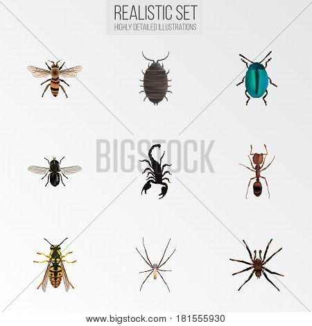 Realistic Emmet, Wisp, Spider And Other Vector Elements. Set Of Bug Realistic Symbols Also Includes Pismire, Fly, Gnat Objects.