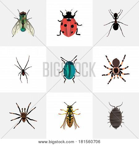 Realistic Ant, Bug, Housefly And Other Vector Elements. Set Of Animal Realistic Symbols Also Includes Ant, Jewel, Tarantula Objects.