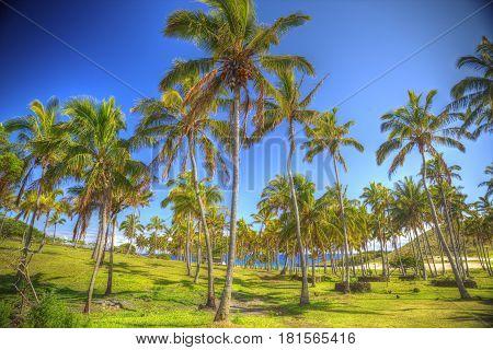 Anakena, A White Coral Sand Beach